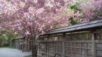 Huge Japanese Park In The Heart Of Mississauga: Kariya Park