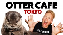 Otter Cafe in Tokyo