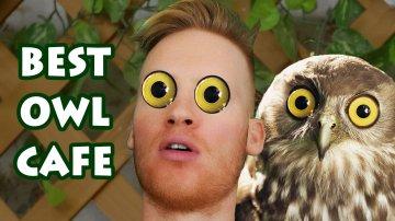 Best Owl Cafe in Tokyo